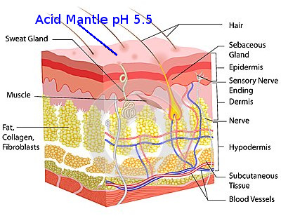 How To Take Care of Your Skin: The Acid Mantle